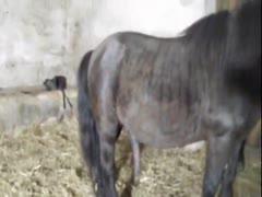 Fucking woman horse Horse fucks