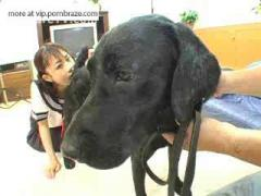 frantic young japanese girl licking ass and dog penis